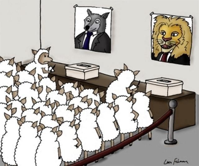 ovejas votando